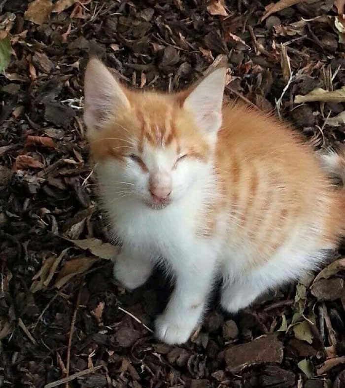 blind-cats-rescued-stevie-isaac-2