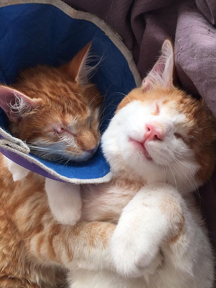 blind-cats-rescued-stevie-isaac-3