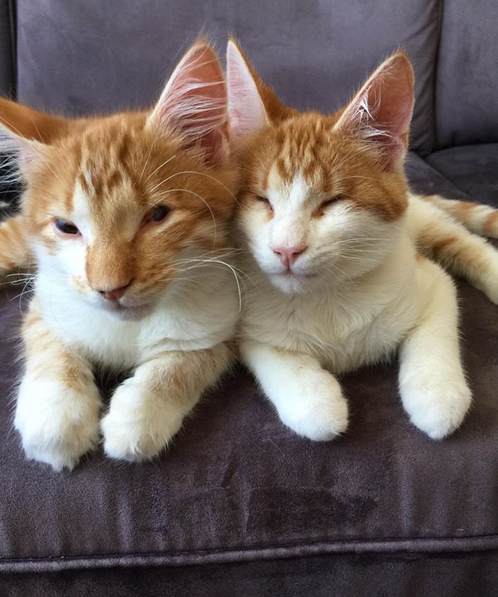 blind-cats-rescued-stevie-isaac-7