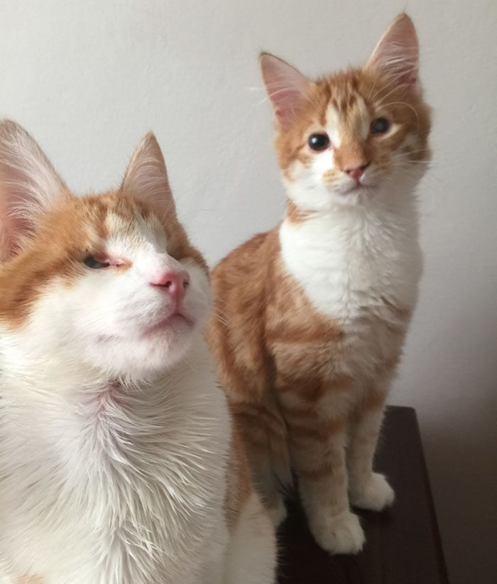 blind-cats-rescued-stevie-isaac-9