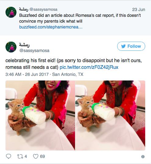 cats-report-04