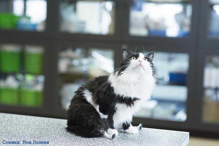 new-leg-cat-01