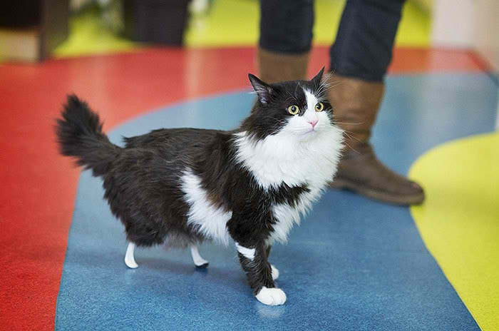 new-leg-cat-10