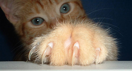 Declawing-Banned-1