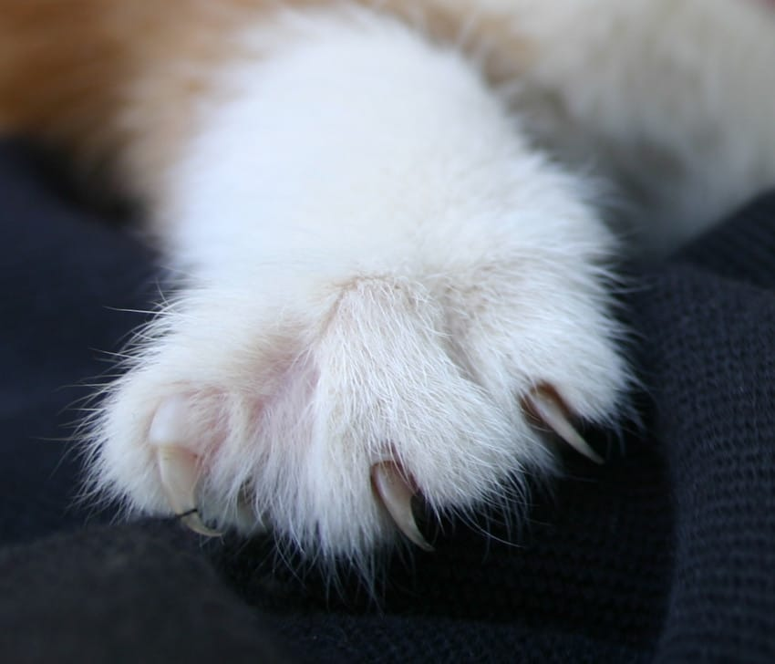 Declawing-Banned-2