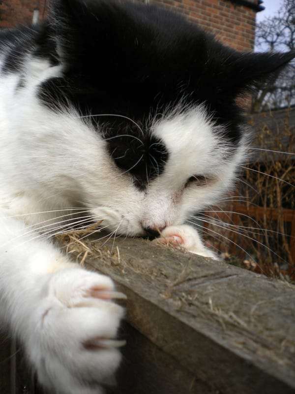 Declawing-Banned-4
