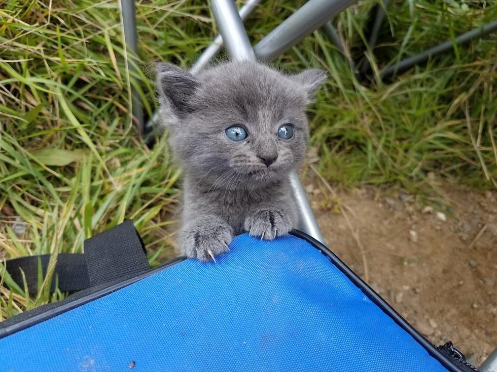 Kitten-Finds-Man-Meowing-1