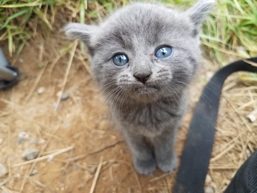 Kitten-Finds-Man-Meowing-2
