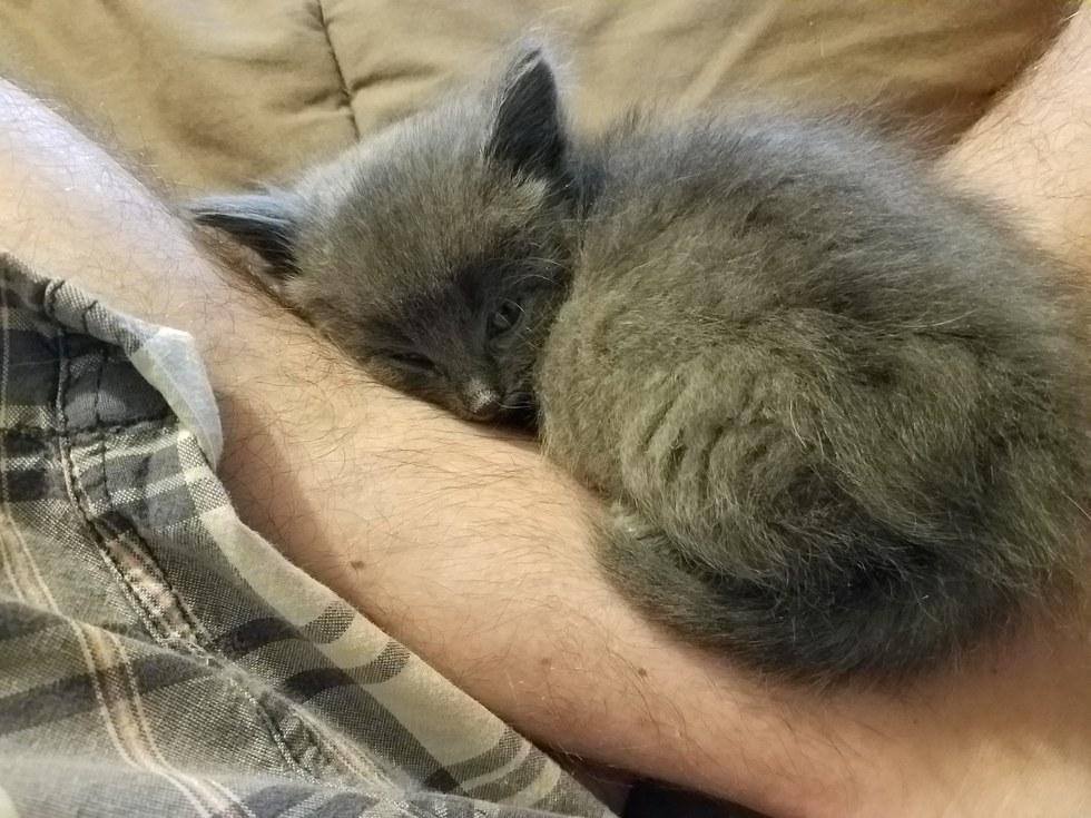 Kitten-Finds-Man-Meowing-3