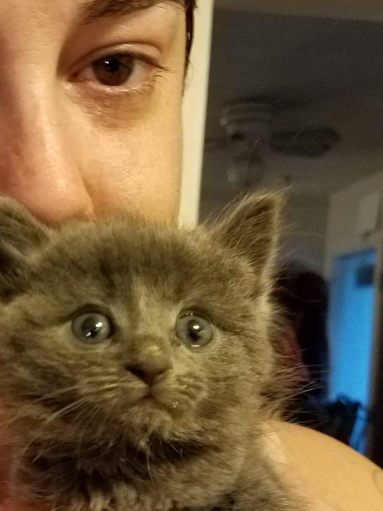 Kitten-Finds-Man-Meowing-5